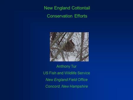 New England Cottontail Conservation Efforts Anthony Tur US Fish and Wildlife Service New England Field Office Concord, New Hampshire.