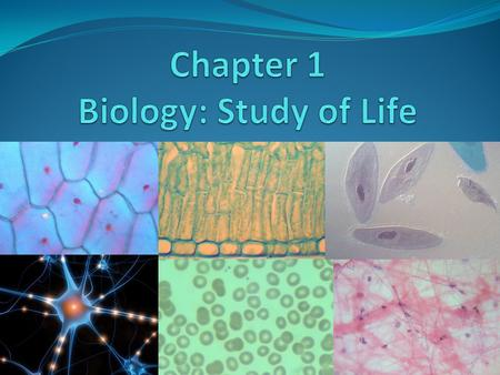 Properties/Characteristics of living things (LT) 1. Cellular organization - made of 1 or more cells 2. Reproduction - able to reproduce 3. Metabolism.