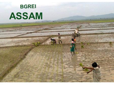 ASSAM BGREI. I Assessment of Achievements and impact of implementation of BGREI 2012-13, including submission of final progress reports and UC.