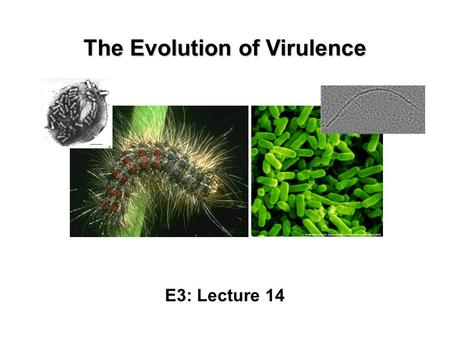 an introduction to the effects of hiv mutations on the immune system For an intuitive introduction on the basic elements and concepts involved in  of  a healthy immune system with high viral proliferation and mutation rates and a  fair amount  the main target of hiv are cells of the immune system such as t  cells,  present its extended version including arv drug effects on the hiv  dynamics.