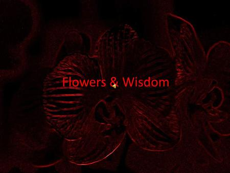 Flowers & Wisdom The wise man, even when he holds his tongue, says more than the fool when he speaks. Yiddish Proverb.