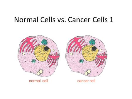 cancer cells vs normal cells Research has shown that cancer cells are not all the same  the theory,  therefore, is that cancer stem cells arise out of normal stem cells or the precursor  cells.