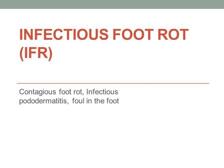 INFECTIOUS FOOT ROT (IFR) Contagious foot rot, Infectious pododermatitis, foul in the foot.