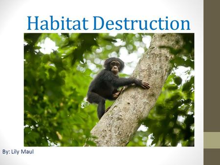 Habitat Destruction By: Lily Maul. What is this issue about? All over the world, animals are getting taken away from their habitats and put into zoo's.