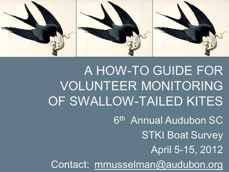 6 th Annual Audubon SC STKI Boat Survey April 5-15, 2012 Contact: A HOW-TO GUIDE FOR VOLUNTEER MONITORING OF SWALLOW-TAILED KITES.