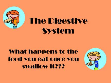The Digestive System What happens to the food you eat once you swallow it???