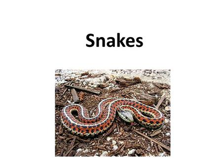 Snakes. Snakes are elongate, legless, carnivorous reptiles of the suborder Serpentes. Snakes are ectothermic, amniote vertebrates covered in overlapping.
