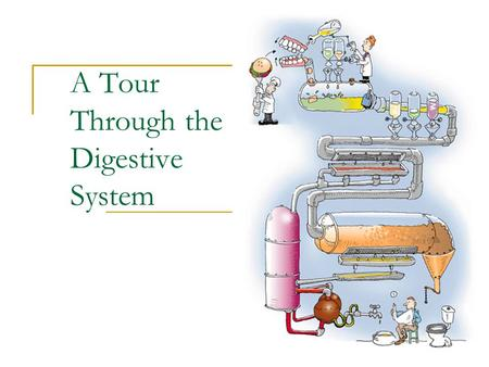 A Tour Through the Digestive System