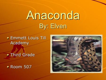 Anaconda By: Elven Emmett Louis Till Academy Third Grade Room 507.