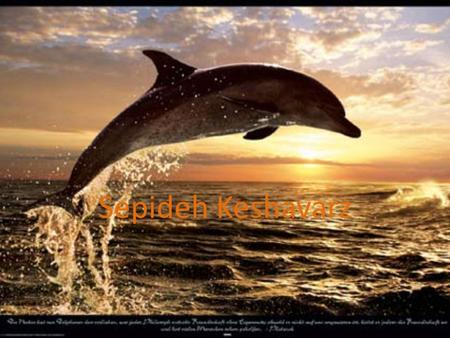 Sepideh Keshavarz. Pages Introduction1 What is dolphin?2 How fast do dolphin swim?3 What dolphin eat?4 How big the dolphin grow?5 Do dolphin have families?6.