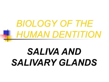 BIOLOGY OF THE HUMAN DENTITION