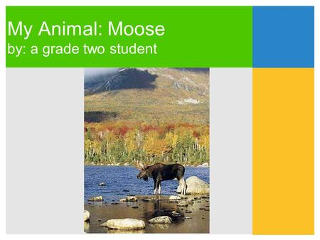 My Animal: Moose by: a grade two student. Moose belong in the Mammals Group.