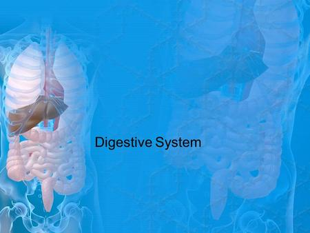 Digestive System. KEY TERMS Alimentary Canal Anus Colon Digestive System Duodenum Esophagus Gallbladder Hard Palate Ileum Jejunum Large Intestine Liver.