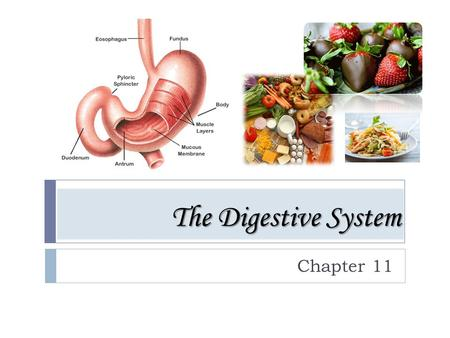 The Digestive System Chapter 11. The Digestive System The process of breaking down food into forms that the body can use.