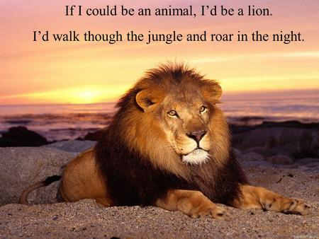 If I could be an animal, I'd be a lion. I'd walk though the jungle and roar in the night.