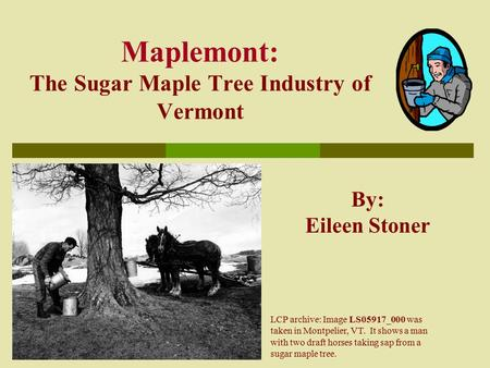 Maplemont: The Sugar Maple Tree Industry of Vermont By: Eileen Stoner LCP archive: Image LS05917_000 was taken in Montpelier, VT. It shows a man with two.