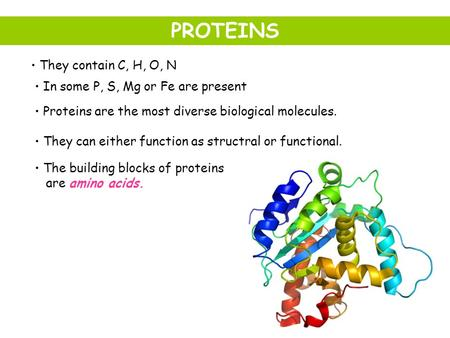 They contain C, H, O, N In some P, S, Mg or Fe are present Proteins are the most diverse biological molecules. They can either function as structral or.