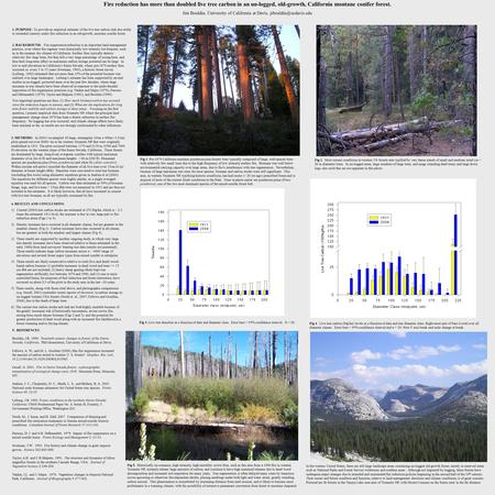 Fire reduction has more than doubled live tree carbon in an un-logged, old-growth, California montane conifer forest. Jim Bouldin, University of California.