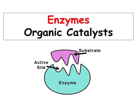 Enzymes Organic Catalysts. Enzymes are Proteins! Proteins contain the elements: C, H, O, N The monomers of proteins are Amino acids.