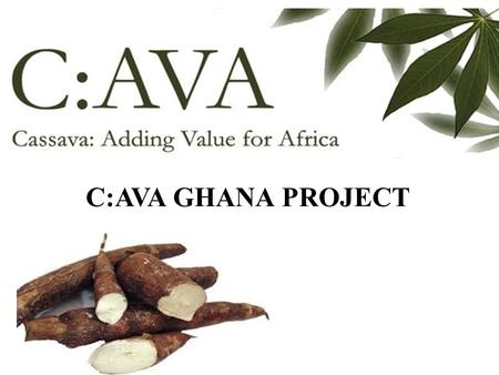 C:AVA GHANA PROJECT. Cassava Adding Value for Africa (C:AVA) Project Is a project being run by CSIR –FRI in collaboration with Greenwich University (NRI.