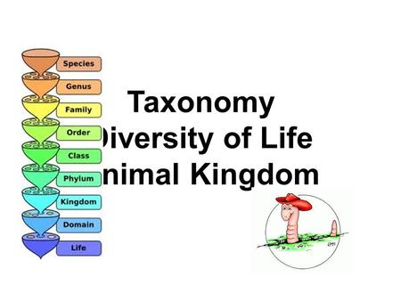 Taxonomy Diversity of Life Animal Kingdom. ? Questions about Kingdoms ? 1.What are the kingdoms of life? 2.Which kingdom(s) is/are single celled? 3.Which.