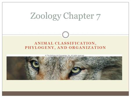 ANIMAL CLASSIFICATION, PHYLOGENY, AND ORGANIZATION Zoology Chapter 7.