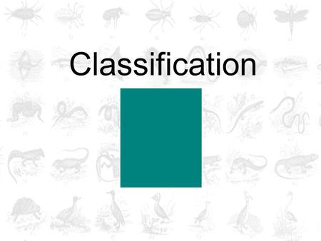 Classification. How would you classify these shapes?