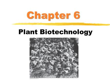 Chapter 6 Plant Biotechnology. Agriculture: The Next Revolution  Biggest industry in the world ($1.3 trillion of products per year)  Plant transgenesis.