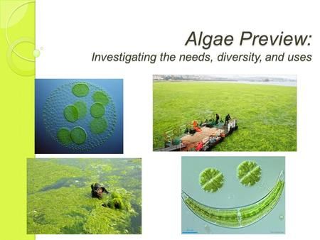 Algae Preview: Investigating the needs, diversity, and uses.