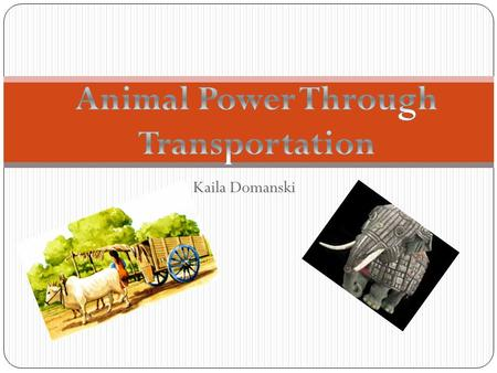 Kaila Domanski What Animals and Where? Dogs were the first to be used as draft animals. Early Eurasian nomads used dogs for hunting reindeer, and soon.