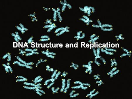 DNA Structure and Replication. Lifespan Gene In The News.