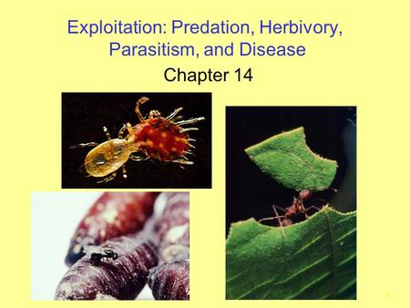 1 Exploitation: Predation, Herbivory, Parasitism, and Disease Chapter 14.
