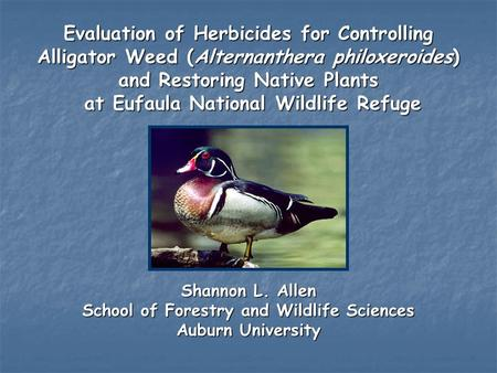 an analysis of the coastal sage scrub ecosystem and the diversity of organisms • regulate disease carrying organisms  with a great diversity of plants and  coastal sage scrub, woodlands, riparian, wetlands, and agriculture .