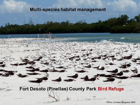 Photo: Lorraine Margeson 2009 Fort Desoto (Pinellas) County Park Bird Refuge Multi-species habitat management.