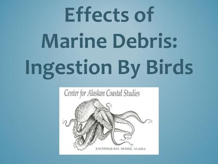 Effects of Marine Debris: Ingestion By Birds. Plastics do not biodegrade or mineralize (go away), but they do photo-degrade when exposed to sunlight,