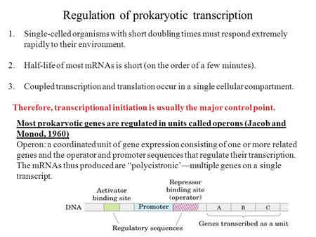 Regulation of prokaryotic transcription 1.Single-celled organisms with short doubling times must respond extremely rapidly to their environment. 2.Half-life.