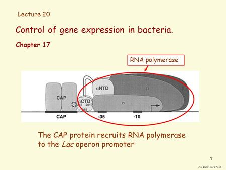 1 Control of gene expression in bacteria. J G Burr, 10/27/13 The CAP protein recruits RNA polymerase to the Lac operon promoter Chapter 17 RNA polymerase.