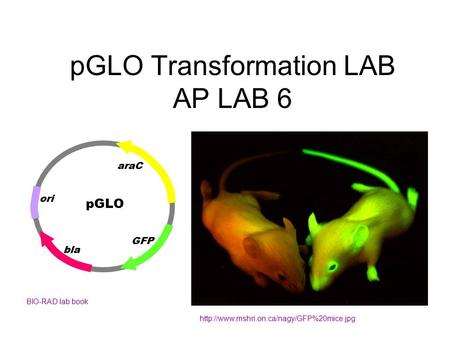 pGLO Transformation LAB AP LAB 6  BIO-RAD lab book pGLO ori bla GFP araC.