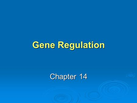 Gene Regulation Chapter 14. Learning Objective 1 Why do bacterial and eukaryotic cells have different mechanisms of gene regulation? Why do bacterial.