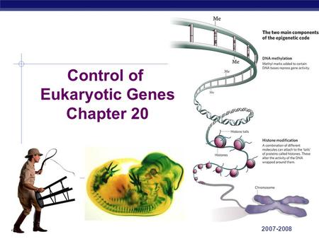 AP Biology 2007-2008 Control of Eukaryotic Genes Chapter 20.