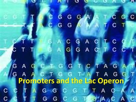 Promoters and the Lac Operon. Regulation in Prokaryotes Adjust biochemistry quickly as environment changes Jacob and Monod  extensive studies into the.