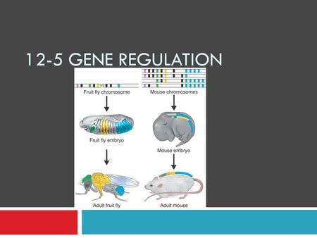 12-5 Gene Regulation.