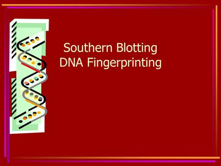 Southern Blotting DNA Fingerprinting. Southern Blot A Southern Blot identifies specific sequences of DNA A Southern Blot may be used to determine a DNA.