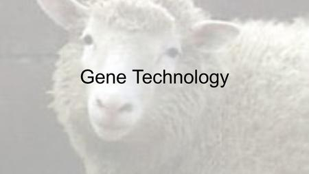 Gene Technology. Vocabulary—Yay! 1.Polymerase chain reaction 2.Primer 3.Restriction enzyme 4.Gel electrophoresis 5.DNA fingerprint 6.Genetic engineering.