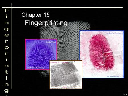 15-1 Fingerprinting Chapter 15 Crystal Violet Red Fluorescent Inked Courtesy of C. Fanning.