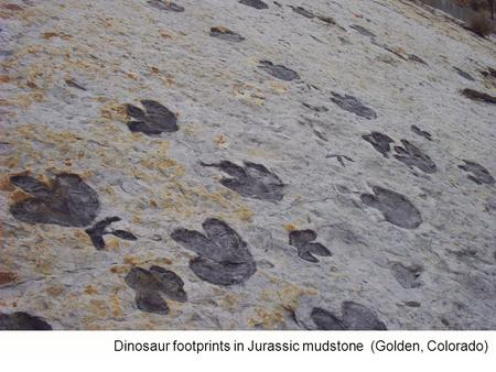Dinosaur footprints in Jurassic mudstone (Golden, Colorado)