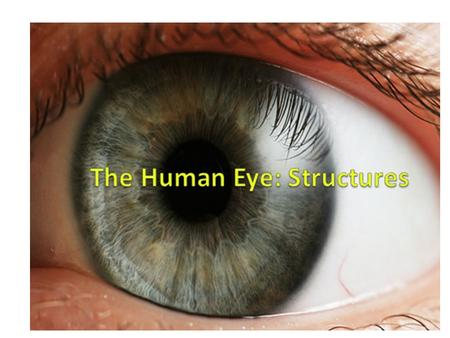 The Human Eye: Structures. We will look at the following parts: