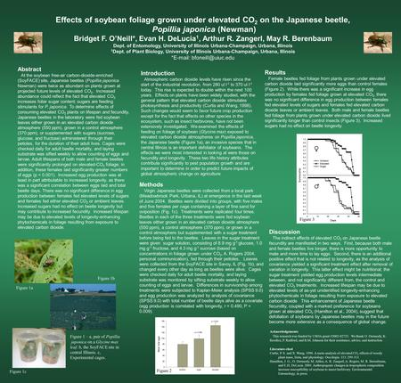 Effects of soybean foliage grown under elevated CO 2 on the Japanese beetle, Popillia japonica (Newman) Bridget F. O'Neill*, Evan H. DeLucia 1, Arthur.