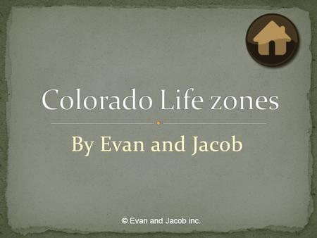 By Evan and Jacob © Evan and Jacob inc.. Alpine Life zone 11,500 feet above sea level Continental divide East Subalpine 10,500-11,500 feet above sea level.