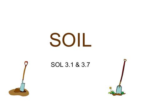 SOIL SOL 3.1 & 3.7 Soil provides support and nutrients for plant growth.